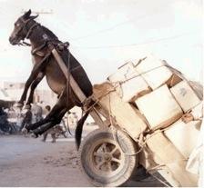 Donkey overloaded